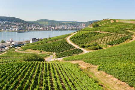 rhein: Vineyards in Rudesheim am Rhein