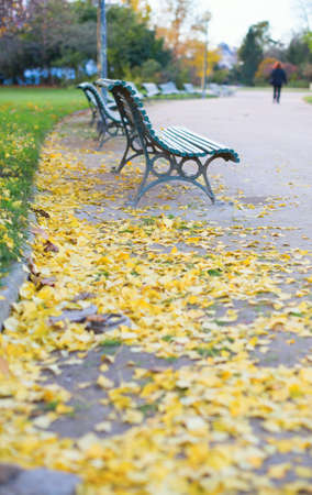 Urban street with yellow fallen leaves on the ground photo