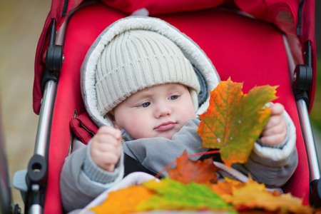 9 months: Cheerful 9 months boy in stroller playing with autumn leaves