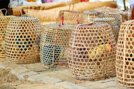 caged: Caged roosters on a Balinese street market
