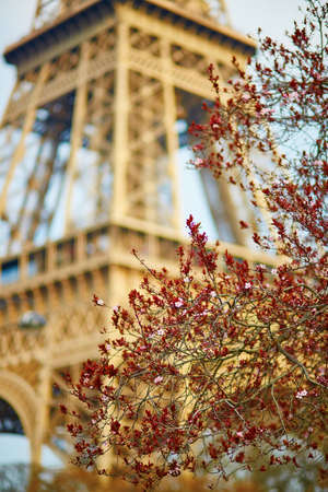 bloomy: Spring in Paris. Bloomy cherry tree and the Eiffel Tower. Focus on flowers Stock Photo