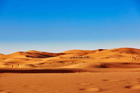 Camel caravan going through the sand dunes in the Sahara Desert, Merzouga, Morocco 스톡 콘텐츠
