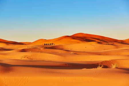 Camel caravan going through the sand dunes in the Sahara Desert, Merzouga, Morocco Archivio Fotografico