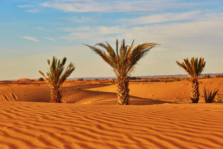 Palmbomen en zandduinen in de Sahara woestijn, Merzouga, Marokko Stockfoto