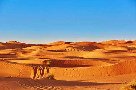 メルズーガ、モロッコ、サハラ砂漠の砂丘を通って行くラクダのキャラバン