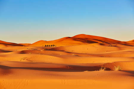 Camel caravan going through the sand dunes in the Sahara Desert, Merzouga, Morocco photo