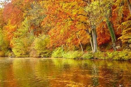 summer trees: Bright autumn trees with their reflection in water