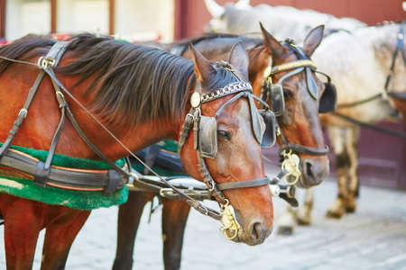 hackney carriage: Horse-driven carriage near St. Stephens Cathedral, Vienna, Austria