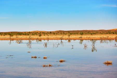 birds desert: Birds in the lake of oasis in Sahara desert, Merzouga, Morocco, Africa Stock Photo
