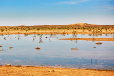 Birds in the lake of oasis in Sahara desert, Merzouga, Morocco, Africa Stock Photo