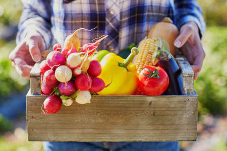 Woman's hands holding wooden crate with fresh organic vegetables from farm Standard-Bild