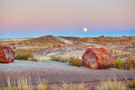 moon  desert: Petrified logs in the Painted desert and Petrified forest national park with full moon, Arizona, USA