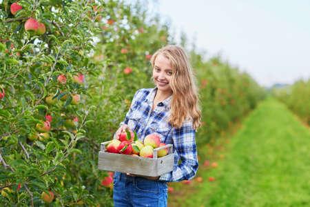 Mooie jonge vrouw het plukken rijpe biologische appels in een houten kist in boomgaard of op de boerderij op een daling van de dag Stockfoto