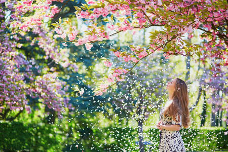 flowering: Beautiful girl in cherry blossom garden on a spring day, flower petals falling from the tree