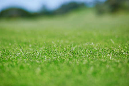 Closeup of green golf courses lawn Stock Photo