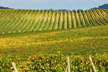 val dorcia: Scenic view of Tuscan vineyards in Val dOrcia, Tuscany, Italy