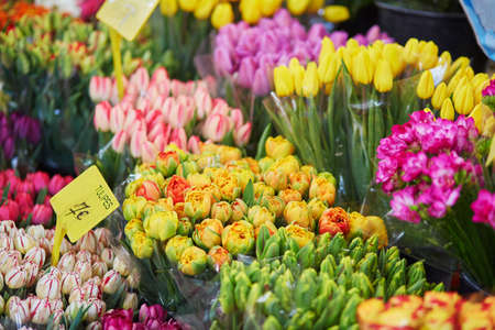 Variety of tulips on flower market in Paris, France Stockfoto