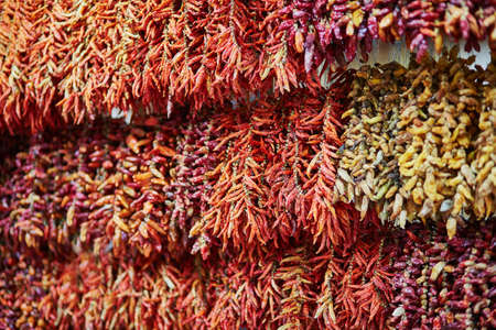 Red dry chili pepper hanging at market in Funchal, Madeira, Portugal