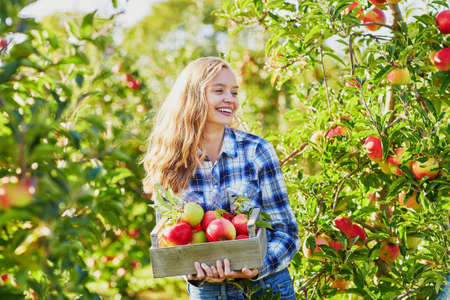 Woman holding crate with ripe red apples on farm. Autumn, harvest and gardening concept 版權商用圖片