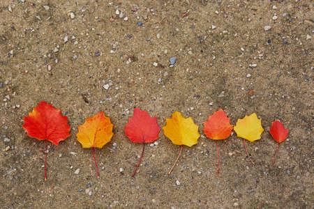 Rojo, amarillo, otoño, hojas, suelo Foto de archivo - 81348102