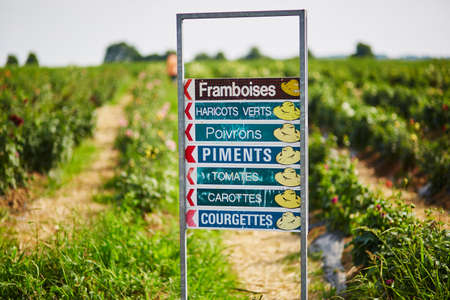 Sign with indicators to different vegetables and fruits growing on farm. Writing in French