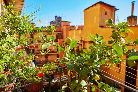 Balcony of a house in Rome, surrounded by lemon trees. Typical residential district in Rome