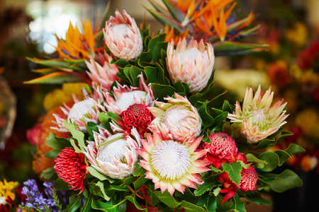 Beautiful protea flowers at famous Mercado dos Lavradores market in Funchal, Madeira island, Portugal