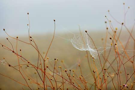 Waterdruppeltjes op een spinnenweb op de vroege ochtend op het platteland