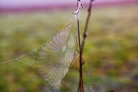 Water droplets on a spider web at early morning in the countryside