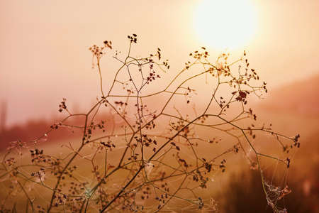 Plant branches over the morning sun on field or meadow