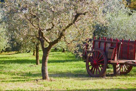 Cart under the olive tree on a farm. San Quirico dOrcia, Tuscany, Italy