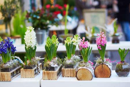Hyacinth flowers in flower shop in Paris, France 스톡 콘텐츠