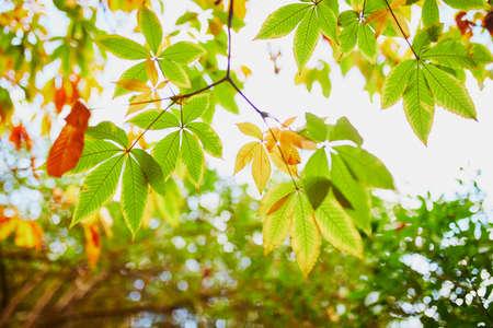 Colorate foglie di castagno nel cielo in una bella giornata autunnale
