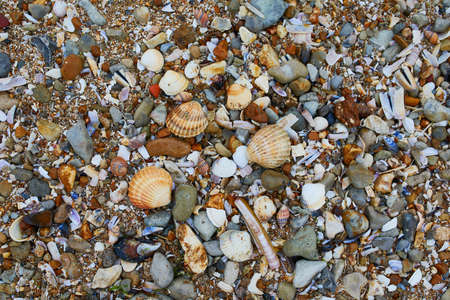 Many sea shells on the beach