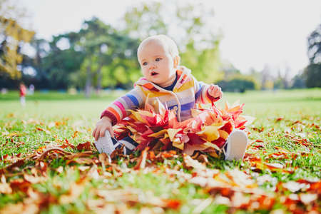 Adorable baby girl sitting on the ground with bunch of red maple leaves on sunny fall day in park. Autumn activities with kids Stock Photo