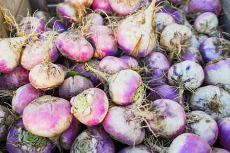 Many ripe organic turnips on farm or market
