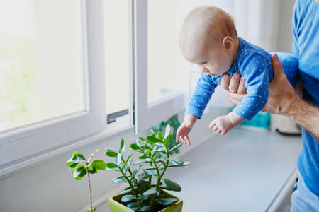 Little baby girl touching green plant at home. Father holding his little daughter and showing her flowers. Kid exploring objects around her Stock fotó