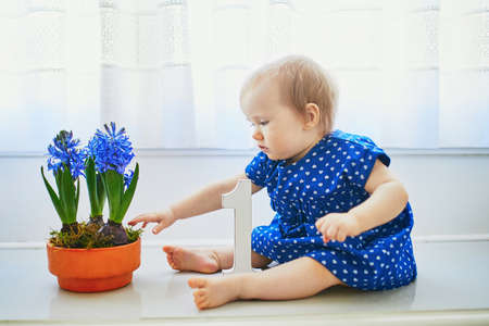Baby girl in blue dress sitting on window sill with blue hyacinths and white wooden number 1. First birthday concept. Toddler having fun with flowers