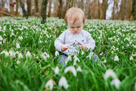 Cute one year old baby girl sitting on the grass with many snowdrop flowers in park or forest on a spring day. Little kid exploring nature. Outdoor activities for children