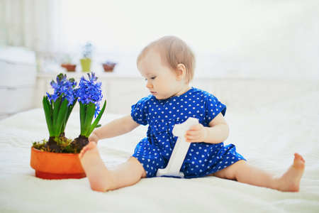 Baby girl in blue dress sitting on bed with blue hyacinths and white wooden number 1. First birthday concept. Toddler having fun with flowers