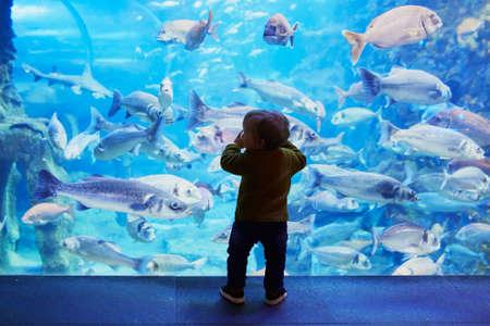 Silhouette of little child enjoying views of underwater life. Toddler having fun in Oceanarium Stock Photo