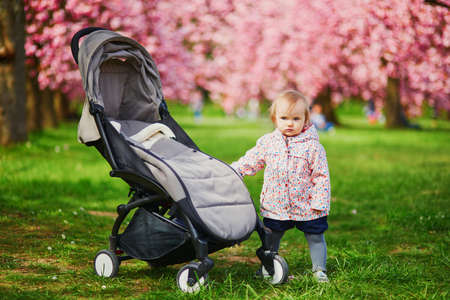 One year old girl standing next to her pushchair in park at cherry blossom season. Little kid enjoying spring day outdoors