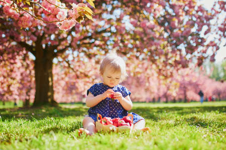 Cute one year old girl sitting on the grass and eating strawberries. Kid in park at sunny weather and cherry blossom season.
