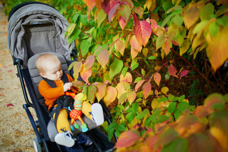 Adorable little girl in bright stylish clothes sitting in pushchair outdoors and touching colorful leaves on a fall day. Autumn walks with kids