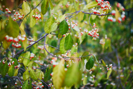 Closeup of colorful bright autumn leaves on a tree or bush 스톡 콘텐츠