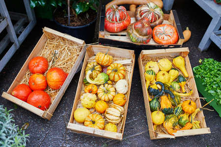 Variety of pumpkins on farmer market in Paris, France