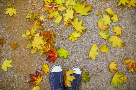 Closeup of female feet in sneakers on ground covered with bright colorful autumn leaves