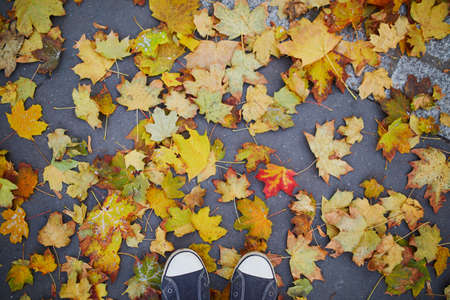 Closeup of female feet in sneakers on asphalt covered with bright colorful autumn leaves