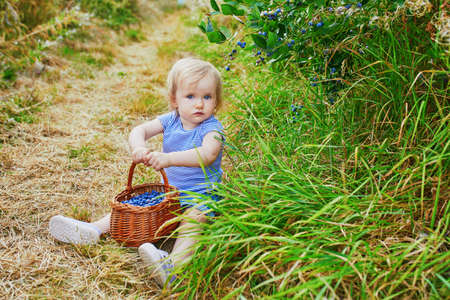 Adorable toddler girl picking fresh organic blueberries on farm. Delicious healthy snack for small children. Outdoor summer activities for little kids.