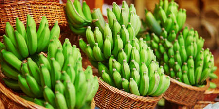 Green bananas on traditional farmer market Mercado dos Lavradores, Funchal, Madeira island, Portugal Zdjęcie Seryjne